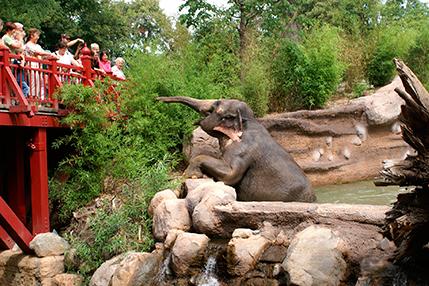 Elefantenkuh_Trinh_auf_der_Suche_nach_dem_besten_Bambus_im_Elefantentempel_Ganesha_Mandir