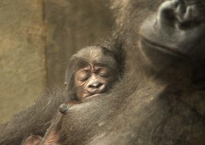 Bildquelle: Zoo Hannover
