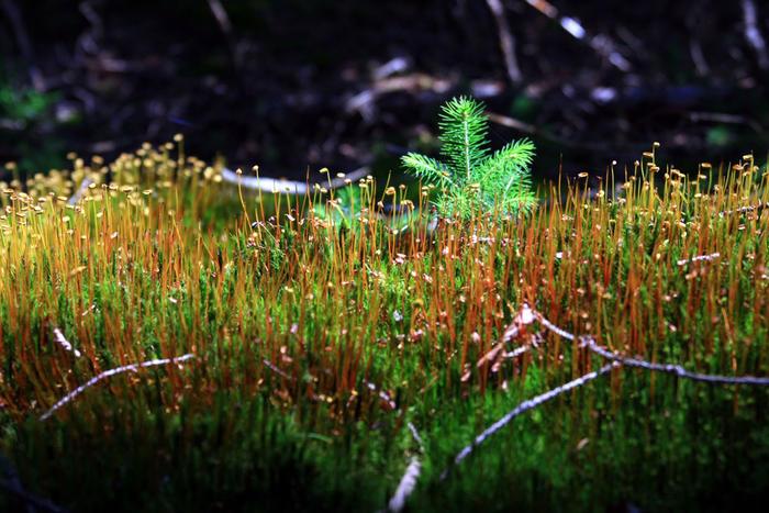 Nationalpark-Bayerischer-Wald_front_magnific